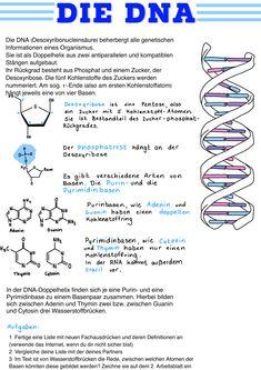 Studium Biologie
