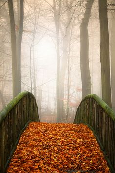 """etherealvistas: """" Autumn Morning by Roy Jankowski """" Seasons Of The Year, Best Seasons, Mabon, Autumn Morning, Autumn Day, Beautiful World, Beautiful Places, Beautiful Pictures, All Nature"""
