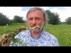 Pasternak - smaczna dzika roślina jadalna naszych łąk - YouTube The Originals, Youtube, Youtubers, Youtube Movies