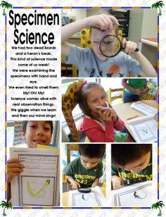 we did science with lizards Lizards, Kindergarten, Science, Fun, Kindergartens, Preschool, Preschools, Pre K, Kindergarten Center Management