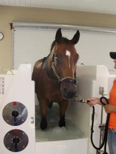 Wellness Wednesday - Rehabilitating and Treating Tendon Injuries at The Sanctuary Equine Sports Therapy & Rehabilitation Center