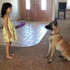 Cute Funny Dogs, Cute Funny Animals, Cute Animal Videos, Funny Animal Pictures, Funny Videos Of Animals, Funny Images, Funny Photos, Malinois Dog, Belgian Malinois Puppies