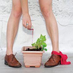 Fertilizei Minha Salada com Sangue de Menstruação