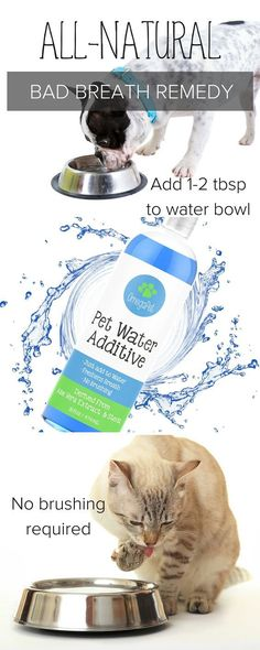 Pet Health Care | DENTAL WATER FRESHENER for Dogs + Cats | Who doesn't love kisses from a dog? Get rid of your dogs bad breath with this all natural remedy. Fights bacteria, cleans teeth and prevents plaque and tartar build up promoting whiter and healthier teeth. Ideal for senior pets. SHOP http://myomegapet.com/products/dental-water-additive-for-dogs-and-cats | Dog Grooming Tips + Ideas | Dog Pet Supplies | Animal Products