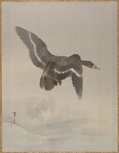 Flying Goose  Watanabe Seitei  (Japanese, 1851–1918)  Period: Meiji period (1868–1912) Culture: Japan Medium: Album leaf; ink and color on silk Dimensions: 14 x 10 3/4 in. (35.6 x 27.3 cm) Classification: Painting