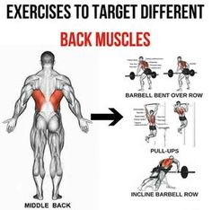 Middle Back – Exercises To Target Different Back Muscles 4 – Yeah We Train ! Middle Back – Exercises To Target Different Back Muscles 4 – Yeah We Train ! Fitness Workouts, Gym Workout Tips, Fun Workouts, Fitness Motivation, Middle Back Exercises, Back Muscle Exercises, Cardio Training, Weight Training Workouts, Back Workout Men