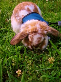 Bunny stops to smell the grass - May 26, 2012