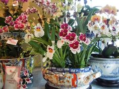 The French Tangerine: ~ ginny's orchids Fresh Flowers, Beautiful Flowers, Orchid Arrangements, Orchids Garden, Garden Pots, Houseplants, Container Gardening, Planting Flowers, Floral Design