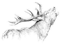 Intégrer à la cellule de création de l'imagerie d'Épinal comme imagier, je vous présente quelques réalisations qui sont en vente à l'imagerie d'Épinal. Créateur de visuel, je m'efforce de rendre réaliste les gestes, les postures, les attitudes de mes modèles et de les représenter dans leurs univers respectifs avec réalisme. Watercolor Animals, Watercolor Art, Animal Drawings, Art Drawings, Elk Tattoo, North American Animals, Deer Drawing, Rendering Art, Hunting Art