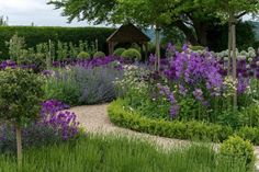 Ordnance House www.ordnancehouse.com West Dean, Salisbury Wiltshire SP5 1JE in Southern  England  NGS Gardens open for charity - Garden changes through the seasons from its late spring & summer displays of purple & white alliums & foxgloves, to the rich colour palette of June -August. Lavender is a signature plant & used throughout the garden. Comprises many herbaceous beds, small orchard, compact soft fruit & vegetable gardens & formal parterre. Seating areas have views of garden…