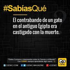 Entérate de Noticias Curiosas El Pais, Notas Curiosas Ecuador y Noticias Curiosas Febrero aquí ➣➢➣ http://www.cienic.com/curiosidades-de-venezuela/