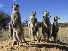 Foto Animali del deserto - 1 di 8 - National Geographic