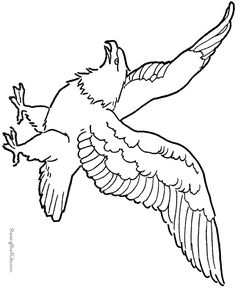 Soaring eagle drawing and coloring page