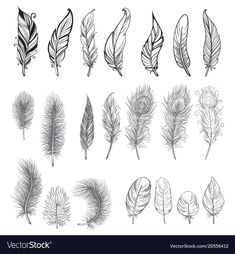 Illustration about Collection of hand drawn feather. Isolated on white background. Set of decorative animals feathers. Illustration of creative, beautiful, background - 91015448 Feather Drawing, Feather Art, Bird Feathers, Feather Sketch, Tribal Feather Tattoos, Feather Tattoo Design, Bird Tattoos, Tattoo Plume, Quill Tattoo