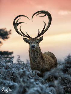 The Loveyoudeer by Max Ellis on 500px