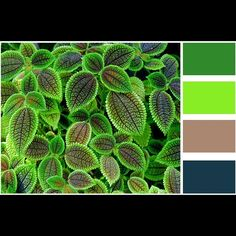 Color palette of the day. Neon reasons. Photo credit: Diego Delso via twistedsifter. #photoofday #picoftheday #beautyiseverywhere #beautiful #color #colorful #colorpalette injinnyous.com #plants #neon