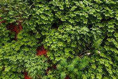 Függőleges kert - Zöld fal egy beton falon egész évben,  #fal #kert #látvány #meleg #növény #nyár #panel #Svédország #tél #város #világítás #zöld #beton #hideg #függőlegeskert #környezetvédelem #zajvédelem, https://www.otthon24.hu/fuggoleges-kert-zold-fal/