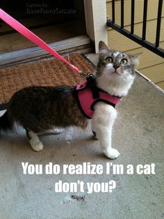 Um... yeah!!! Why on earth would you put a collar/leash on a cat?!