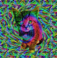psychedelic cat psychedelic gif | WiffleGif