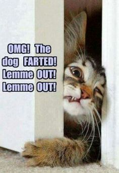 Omg! The dodge farted! Lemme out!