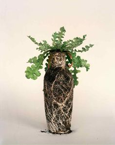 not lingerie but a lace translation - feminine vase