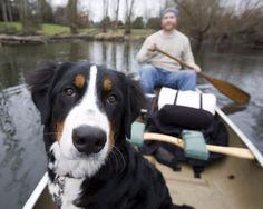Urlaub und Freizeit mit Hund am Tollensee in Deutschland (c) Seehotel Heidehof