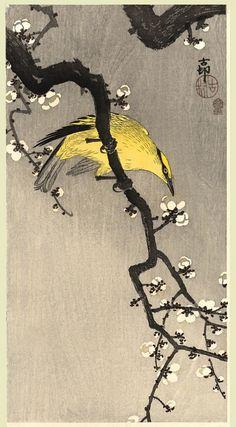 wasbella102: Oriole Koson, c. 1910.