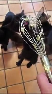 Cute Little Animals, Cute Funny Animals, Funny Cats, Cute Kittens, Cats And Kittens, Big Cats, Crazy Cat Lady, Crazy Cats, Cute Animal Videos