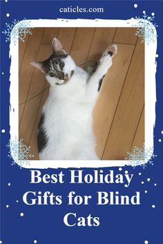 27 Blind Cat Care Tips Ideas Cat Care Cat Care Tips Cats
