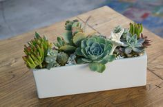 Succulent windowsill box by Simply Succulent https://www.facebook.com/pages/Simply-Succulent/222665291108990