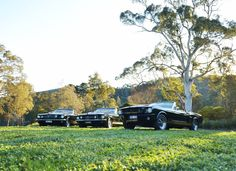 Mustangs in Black 1966 and 1967 GT Convertible Ford Mustangs, including our 1966 Shelby GT350, out for Olivia and Ryan's wedding shoot.