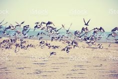 Oystercatchers in Flight royalty-free stock photo Great Backgrounds, Commercial Art, More Images, Abstract Photos, Image Now, Royalty Free Stock Photos, In This Moment, World, Nature