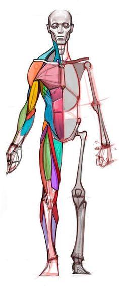 Anatomy at Cubebrush