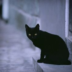 Black cat for luck