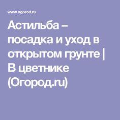 Астильба – посадка и уход в открытом грунте | В цветнике (Огород.ru)