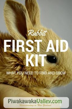 Having a rabbit first aid kit set up and in a cupboard ready to go reduces a lot of stress when you are dealing an animal as everything is at the ready.