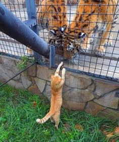 Love Cute Animals shares pics of playful animals, cute baby animals, dogs that stay cute, cute cats and kittens and funny animal images. Funny Animal Memes, Funny Animal Pictures, Cute Funny Animals, Cute Baby Animals, Animals And Pets, Cute Cats, Funny Cats, Cat Memes, Animals Images