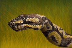 Python : Hand Painting