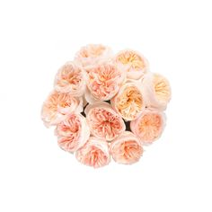 Peach Garden Rose Bouquet david austin patience rose bridal bouquet | all white or cream