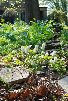 Wife, Mother, Gardener: Shade Garden Treasures for Spring