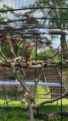 Outdoor Cat Enclosure, Outdoor Cats, Outdoor Structures