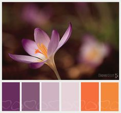 'Porange'............purples and orange by leavesnbloom for #6 of ColorMe Weekly.