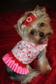 Yorkie, Valentine, Pink Yorkie, Mia Yorkie, Hearts, Dogs
