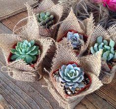 """Succulent Favors Assorted Collection. 10 Premium Succulents in 2"""" pots Wrapped in Burlap - La Fleur Succulente by LaFleurSucculente on Etsy https://www.etsy.com/listing/230180886/succulent-favors-assorted-collection-10"""