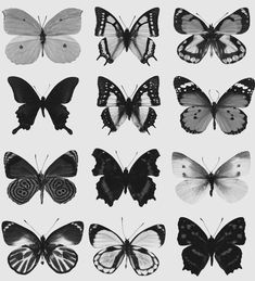 Uploaded by Heloisa Carlos. Find images and videos about black and white and butterfly on We Heart It - the app to get lost in what you love. Butterfly Art, Butterflies, Black And White Picture Wall, Black And White Pictures, Aesthetic Images, Aesthetic Wallpapers, Butterfly Drawing Images, Piercings, Tatoo