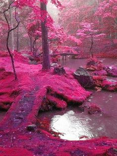 Ireland...are you kidding me all this pink is like a fairytale