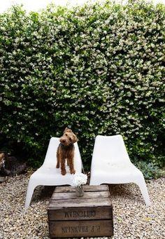 Dog + Hedge.