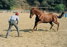 Hightower, one of the busiest horses in movies, played Pilgrim in The Horse Whisperer, Ginger in Black Beauty, and Julia Roberts' mount in Runaway Bride. He died in 2008 at the age of 26.