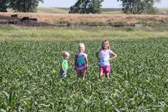 @CommonGround Nebraska blogger, Lana's kids are showing how tall the corn is in May.