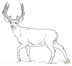deers coloring pages | free coloring pages Deer Coloring Pages